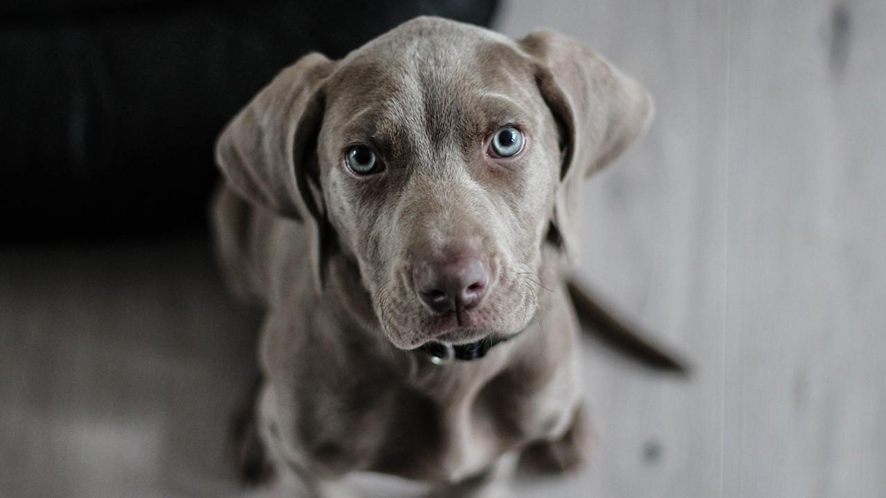 post2 2 - Hunde Halfen Frühen Menschen bei der Jagd Laut einer Neuen Studie