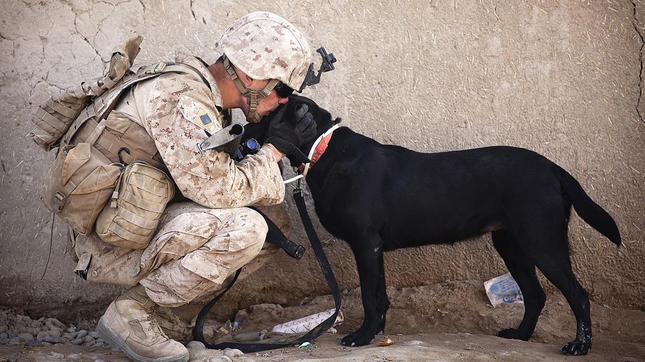 post2 3 - Hunde Halfen Frühen Menschen bei der Jagd Laut einer Neuen Studie
